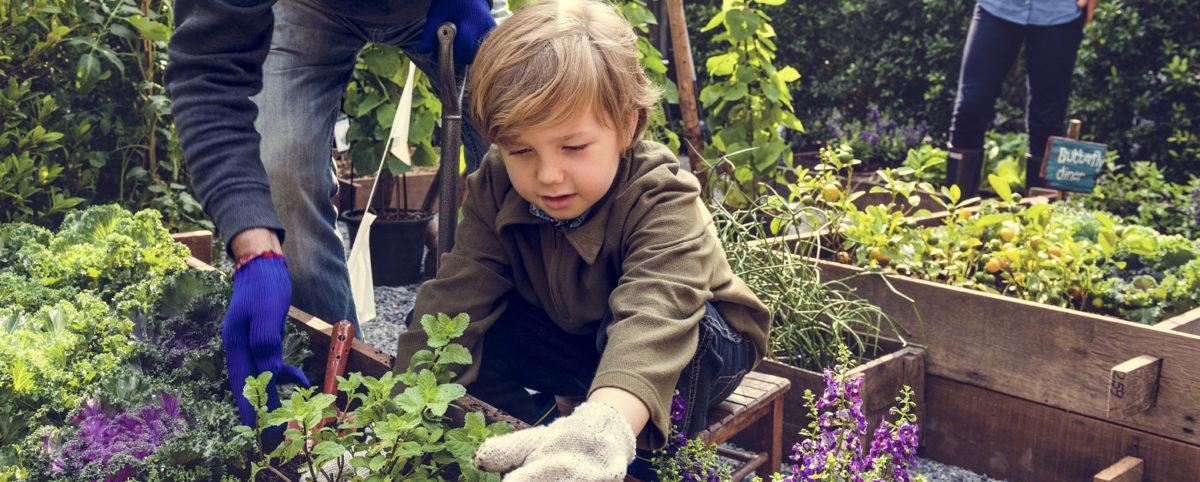 jardin potager parc résidentiel