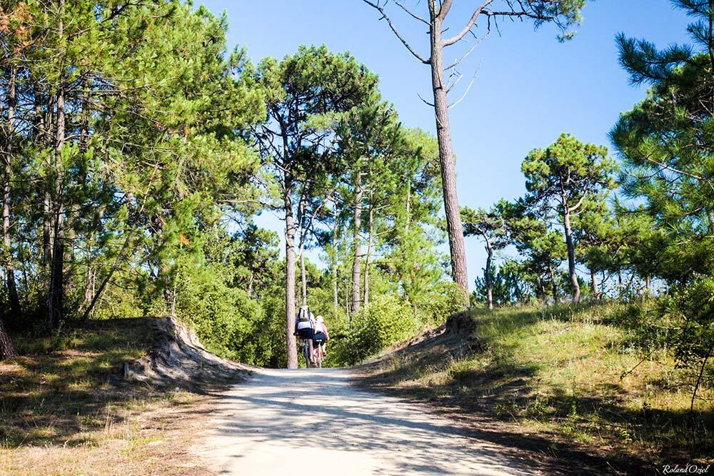 pistes cyclables forêt vendée